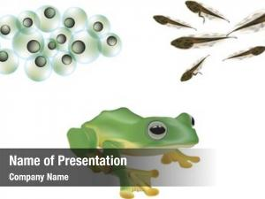 Stages illustration three frog lifecycle