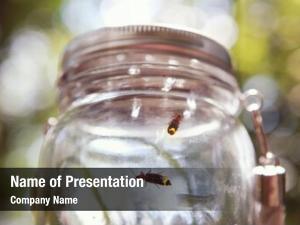 Fireflies soft focus jar, shallow