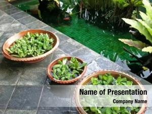 Plants pot floating balinese arcitectural