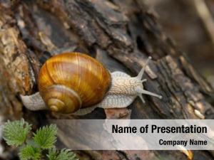 Ground snail creeping