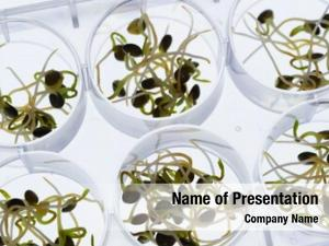Quality microgreen sprouts control sanitary