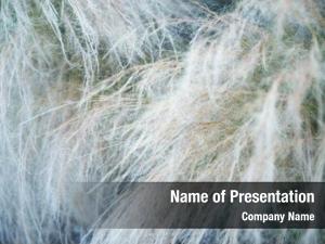 Transparent soft feather grass