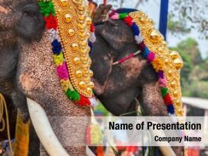 Hindu decorated elephants temple temple