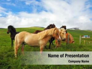 Graze well groomed horses play each
