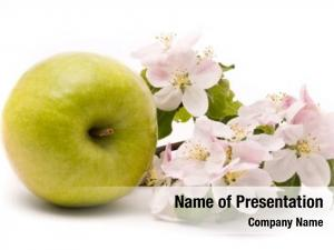 Apple ripe green apple tree blossoms