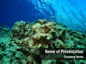 Dead environmental problem coral reef