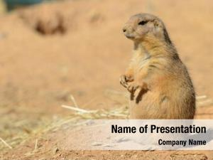 Close prairie dog