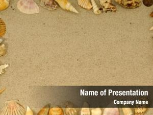 Different frame many seashells