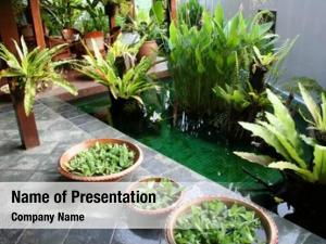 Plants pot floating balinese architectural