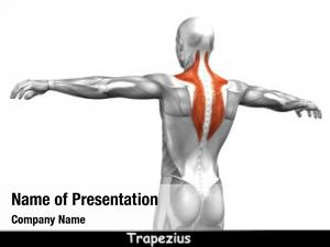 Back concept conceptual human anatomy