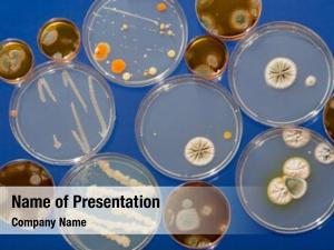 Petri bacterial colonies dishes