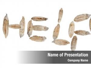 Out help written wheat seeds