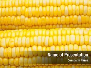 Corn corn cob, grains close up,