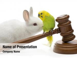 Laws animal protection concept