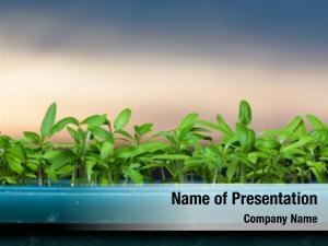 Environmental growing seedlings at sunrise