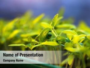 Growing seedlings powerpoint theme