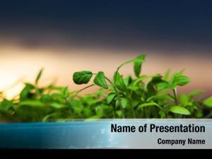 Growing seedlings powerpoint background