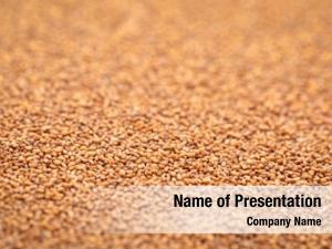 Brown gluten free teff grain