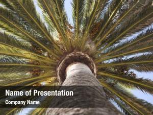 Palm top part tree