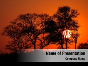 Savanna silhouetted african tree sunset,