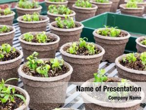 Botany pots seedlings garden