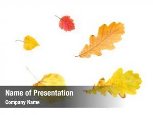 Autumn nature, season, botany concept
