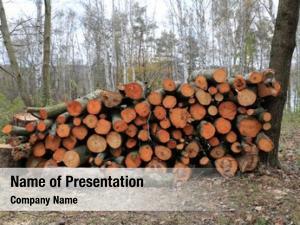 Store landscape firewood forest