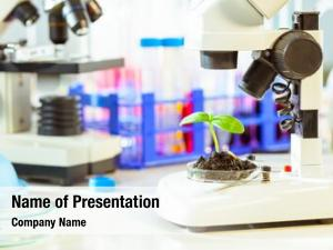Plants study agricultural biological laboratory,