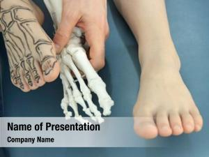 Drawing human foot bones skin,