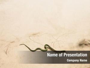 Across snake slithering dry desert