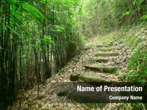 Forest green bamboo path leads
