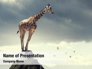 Giraffe concept power leadership