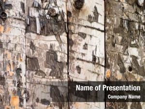 Texture wood slab
