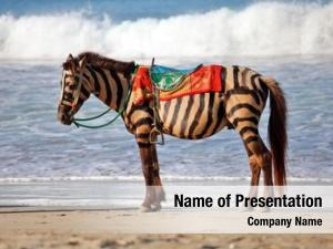 Fake zebra horse, zebra beach