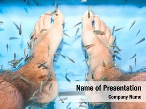 Feet fish spa pedicure skin