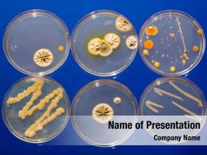 Petri dish samples