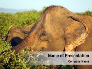 Elephant portrait indian jungle