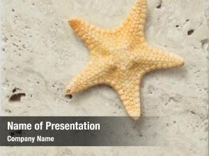 Slab starfish marble