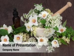 Medicinal flower powerpoint background