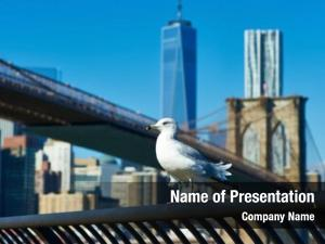 Skyline seagull manhattan brooklyn bridge