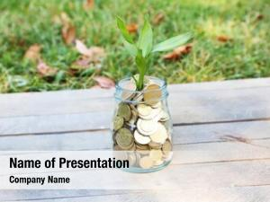 Coins plant growing outside