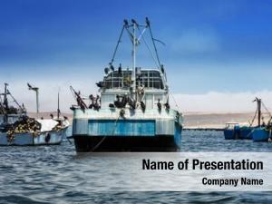 Vessels birds board fishing ship
