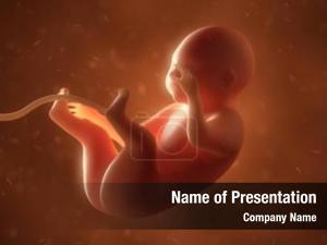 Fetus medical human month
