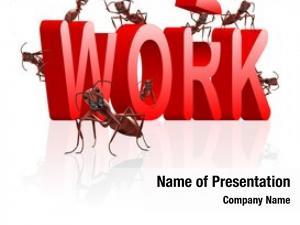 Career work working job employment