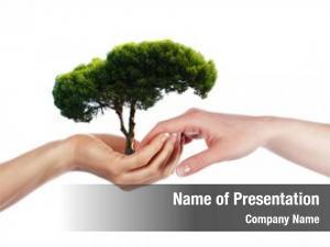 Symbol palms tree environmental protection