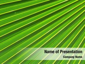Tree green palm lined lite