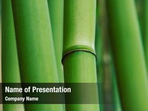 Bamboo abstract zen