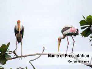 Tree painted storks top