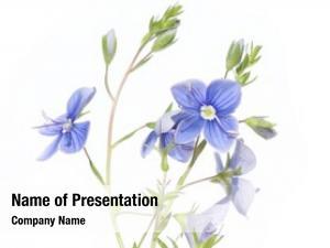 White flora against