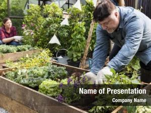 Man adult farmer planting vegetable